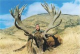 Glenroy Hunting Safaris - New Zealands Best Hunting - elk63